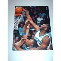 Charlotte Hornets The History of the Charlotte Hornets (Pro Basketball Today)